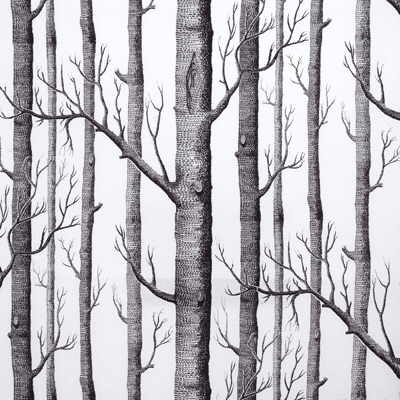 wallpaper tree. birch tree wallpaper. irch